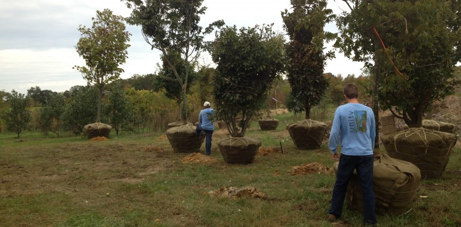 Planting and Transplanting<br />Trees, Shrubs and Perennials