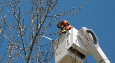 Tree Maintenance & Removal<br / >